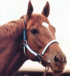 Secratariat (My friends horse is related to him)