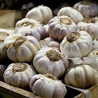 Aloe Vera, Garlic, Vegetables, Green, Gardening, Food, Veggies, Lawn And Garden, Vegetable Recipes