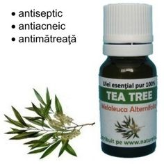 Melaleuca, Tea Tree, Coconut Oil, Essential Oils, Jar, Cosmetics, Beauty Products, Jars, Glass