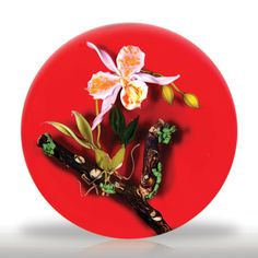 Paul Stankard 1985 pink orchid on red ground paperweight.(89) images