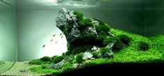 2015 AGA Aquascaping Contest - Entry #108