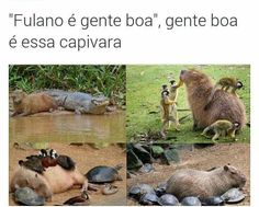 Read Só 192 from the story Só Coisas Legais 3 (MEMES) by CDoceMel (Mel) with reads. Top Memes, Dankest Memes, Funny Memes, Jokes, Memes Status, Pet Loss, Wtf Funny, I Laughed, Funny Animals