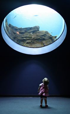 Georgia Aquarium: Where Imaginations Go To Play