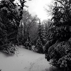 Out for a ski  #vermont #vt #boltonvalley #backcountry #trees #snow #ski