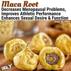 Ancient Andean shepherds ate the fleshy root (similar to ginger) as a vegetable and fed it to their livestock. They noticed that the herb improved their herds' health and appeared to increase their fertility an observation confirmed centuries later by stu Cure For Sunburn, Herbs For Fertility, Maca Benefits, Health Benefits, Herbs For Depression, Fruits And Veggies, Vegetables, Detox Juice Cleanse