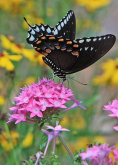 ~~Swallowtail butterfly by ronboring~~