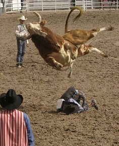Want to become a bull rider?