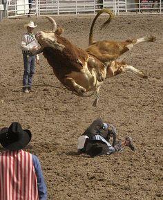Bull riding..