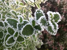 Frosty edges!