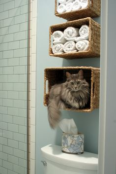 Wall baskets for kitty storage?