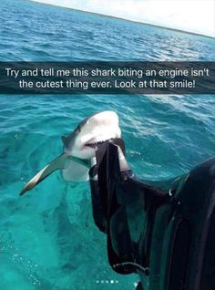 24 Funny Animal Pictures Of The Day 24 Lustige Tierbilder des Tages – Lustige Tiere – Täglich LOL Pics Funny Animal Jokes, Cute Funny Animals, Cute Animal Humor, Funy Animals, Funny Animals With Captions, Boat Captions, Stupid Animals, Smiling Animals, Cute Captions