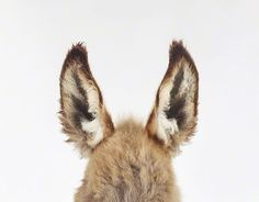 We can't! So fuzzy! Interview With Baby Animal Photographer Sharon Montrose: