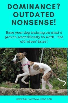 Dog Training Tips Dog training, puppy training, pack theory Dog Training Books, Puppy Training Tips, Training Your Dog, Potty Training, Agility Training, Training Schedule, Dog Agility, Training School, Training Collar