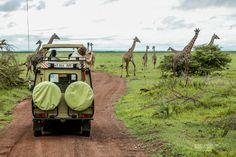Safari, Tanzania