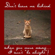 Don't leave me behind! I've seen it happen too many times and it's horrible and heartbreaking--especially for the cats.