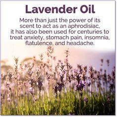 10 Days of Essentail Oils: Lavendar Oil Natural Remedies For Sunburn, Sunburn Remedies, Psoriasis Remedies, Cellulite Remedies, Lavender Oil Uses, How To Treat Anxiety, Healing Oils, Holistic Remedies, Natural Health