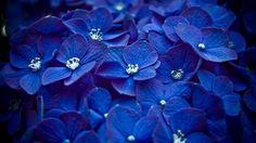 Culoarea Albastru – istorie, simbolistica si efecte