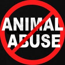 Are there any orginazations that promote/teach animal attacks or abuse?