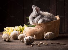 cute easter bunny with colored eggs by peterzsuzsa on @creativemarket