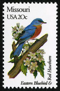 Missouri - Eastern Bluebird and Red Hawthorn