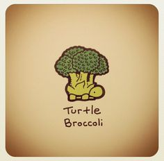 Turtle broccoli