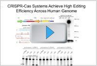 CRISPR/Cas Video