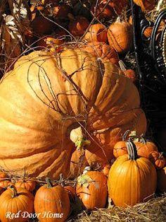 Red Door Home: Pumpkins, Cornstalks & Spiders