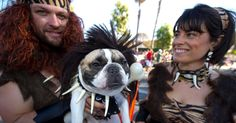 Take it to the roots #Costume #Bulldogs #Pets #Halloween