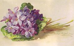 Sweet French Violets C. Klein