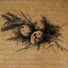 Eggs Birds Nest Bird Digital Image Download Transfer To Pillows Tote Tea Towels Burlap No. 1589