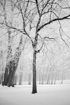 Winter in Madison Indiana Madison Indiana, Indie, Southern, Outdoors, Canvas Prints, Winter, Sweet, Travel, Life