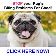 46 Best Pug Problems Images Pugs Pug Pug Dogs