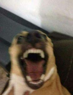 Funny Animal Jokes, Funny Dog Memes, Cute Memes, Really Funny Memes, Funny Animal Pictures, Cute Funny Animals, Stupid Funny Memes, Funny Relatable Memes, Cute Baby Animals