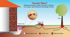 termite termido treatment