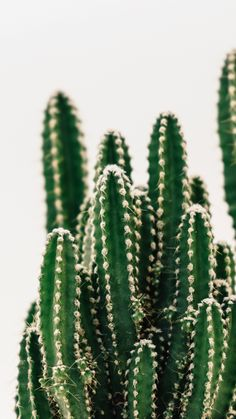 CACTUS cause Cactus and Succulents are the shiz! & Plants CACTUS cause Cactus and Succulents are the shiz! & Plants The post CACTUS cause Cactus and Succulents are the shiz! Plant Wallpaper, Mobile Wallpaper, Iphone Wallpaper, Desktop Wallpapers, Wallpaper Downloads, Cactus Photography, Nature Photography, Wall Herb Garden Indoor, Herb Wall