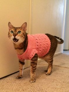 I got Sheba a new sweater. She wasn't as excited about it as I was.