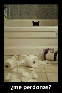 Sí gatito!!