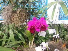 Jardim botânico - RJ