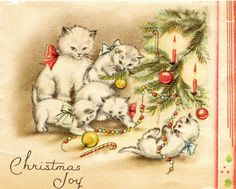 Christmas cat joy.