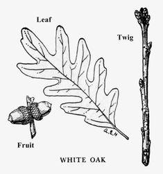 White Oak White Oak, Vermont, Ranger, Hair Accessories, Hair Accessory