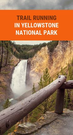 Trail Running In Yellowstone National Park Trail Running In Yellowstone National Park Herbal Remedies, Health Remedies, Asthma Remedies, Health Goals, Health Tips, Health Care, Health Benefits, Natural Teething Remedies