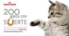 Participa en el sorteo #200gatosconsuerte de @RoyalCanin_Es y gana un lote de alimento para tu gato.