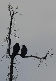 Raven Negative Space by Corbeau du Nord, via Flickr