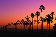 Los Angeles Sunset With Palm Trees wallpaper Sunset Wallpaper, Tree Wallpaper, Heaven Wallpaper, Wallpaper Ideas, Desktop Wallpapers, Nature Wallpaper, Beautiful Sunset, Beautiful World, Beautiful Places