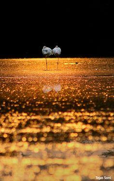 Insieme nella golden hour, by Tejas Soni, via 500px