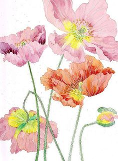 Poppies nearly gone past their prime (poppy flowers GABBY MALPAS). Watercolor Poppies, Watercolor And Ink, Illustration Photo, Illustrations, Silk Painting, Botanical Art, Art Floral, Flower Art, Drawings