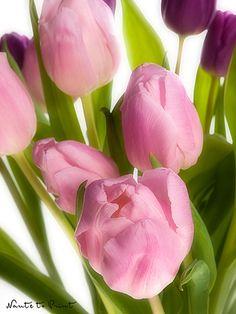Blumenbild-Kunstdruck und Leinwandbild rosa Tulpenstrauß