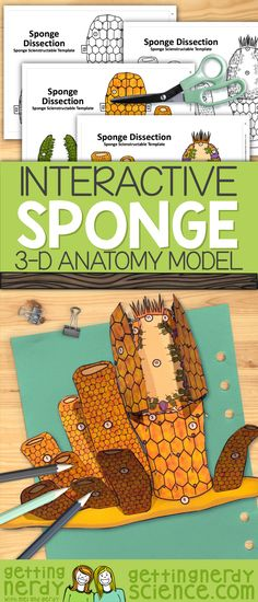 This Porifera sponge dissection model can be used as a dissection-free sponge exploration, a pre-dissection study tool, or even as a summative assessment for comparative anatomy. Students will be able to identify and explain the structure and function Biology Lessons, Teaching Biology, Science Lessons, Science For Kids, Life Science, Science Experiments, Earth Science, Science Biology, Teaching Resources