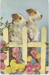 On the fence Vintage Playing Cards, Vintage Greeting Cards, Vintage Postcards, Wire Fox Terrier, Terrier Dogs, Yorkie Dogs, Puppies, Smooth Fox Terriers, Portraits