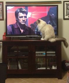 The cat has excellent taste. Nathan Fillion